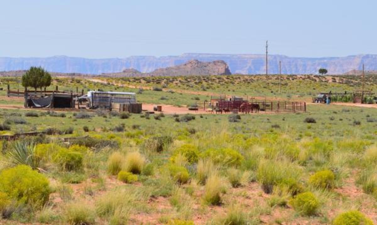 Glamping, Navajo Style: Shash Diné Eco-Retreat Offers a Unique B&B Experience