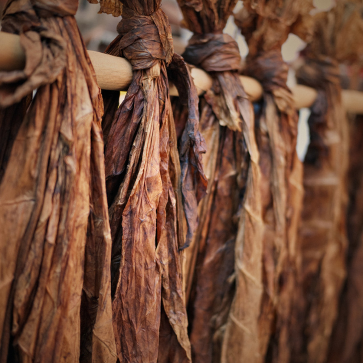 Never underestimate the power of our sacred tobacco. Photo - iStock - Native Students article