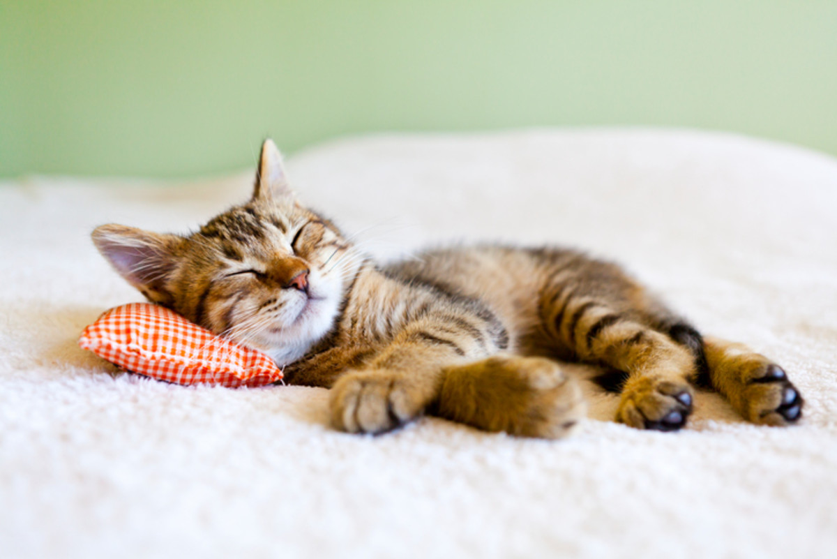 Getting enough sleep increases productivity. Photo - iStock